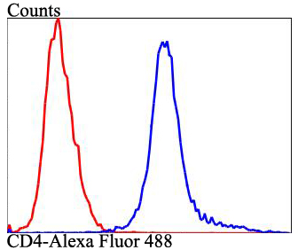 Flow cytometric analysis of Raji cells with CD4 antibody at 1/100 dilution (blue) compared with an unlabelled control (cells without incubation with primary antibody; red). Alexa Fluor 488-conjugated goat anti-rabbit IgG was used as the secondary antibody.