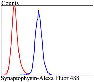 Flow cytometric analysis of SHG-44 cells with Synaptophysin antibody at 1/100 dilution (blue) compared with an unlabelled control (cells without incubation with primary antibody; red). Alexa Fluor 488-conjugated goat anti-rabbit IgG was used as the secondary antibody.
