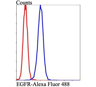 Flow cytometric analysis of EGFR was done on A431 cells. The cells were fixed, permeabilized and stained with EGFR antibody at 1/100 dilution (blue) compared with an unlabelled control (cells without incubation with primary antibody; red). After incubation of the primary antibody on room temperature for an hour, the cells was stained with a Alexa Fluor™ 488-conjugated goat anti-rabbit IgG Secondary antibody at 1/500 dilution for at least 30 minutes.