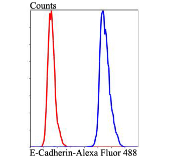 Flow cytometric analysis of E-Cadherin was done on Hela cells. The cells were fixed, permeabilized and stained with E-Cadherin antibody at 1/100 dilution (blue) compared with an unlabelled control (cells without incubation with primary antibody; red). After incubation of the primary antibody on room temperature for an hour, the cells was stained with a Alexa Fluor™ 488-conjugated goat anti-rabbit IgG Secondary antibody at 1/500 dilution for 30 minutes.