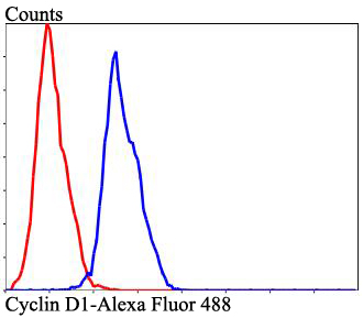 Flow cytometric analysis of Cyclin D1 was done on HepG2 cells. The cells were fixed, permeabilized and stained with Cyclin D1 antibody at 1/100 dilution (blue) compared with an unlabelled control (cells without incubation with primary antibody; red). After incubation of the primary antibody on room temperature for an hour, the cells was stained with a Alexa Fluor™ 488-conjugated goat anti-rabbit IgG Secondary antibody at 1/500 dilution for 30 minutes.