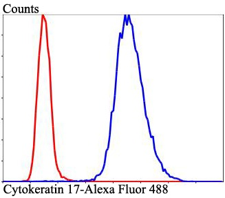 Flow cytometric analysis of Cytokeratin 17 was done on Hela cells. The cells were fixed, permeabilized and stained with Cytokeratin 17 antibody at 1/100 dilution (blue) compared with an unlabelled control (cells without incubation with primary antibody; red). After incubation of the primary antibody on room temperature for an hour, the cells was stained with a Alexa Fluor™ 488-conjugated goat anti-rabbit IgG Secondary antibody at 1/500 dilution for 30 minutes.