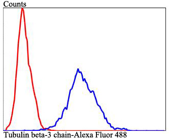 Flow cytometric analysis of Hela cells with Tubulin beta-3 chain antibody at 1/100 dilution (blue) compared with an unlabelled control (cells without incubation with primary antibody; red). Alexa Fluor 488-conjugated goat anti-rabbit IgG was used as the secondary antibody.