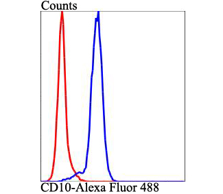 Flow cytometric analysis of Jurkat cells with CD10 antibody at 1/100 dilution (blue) compared with an unlabelled control (cells without incubation with primary antibody; red). Alexa Fluor 488-conjugated goat anti-rabbit IgG was used as the secondary antibody.