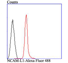Flow cytometric analysis of SHG-44 cells with NCAML1 antibody at 1/100 dilution (red) compared with an unlabelled control (cells without incubation with primary antibody; black). Alexa Fluor 488-conjugated goat anti-rabbit IgG was used as the secondary antibody.