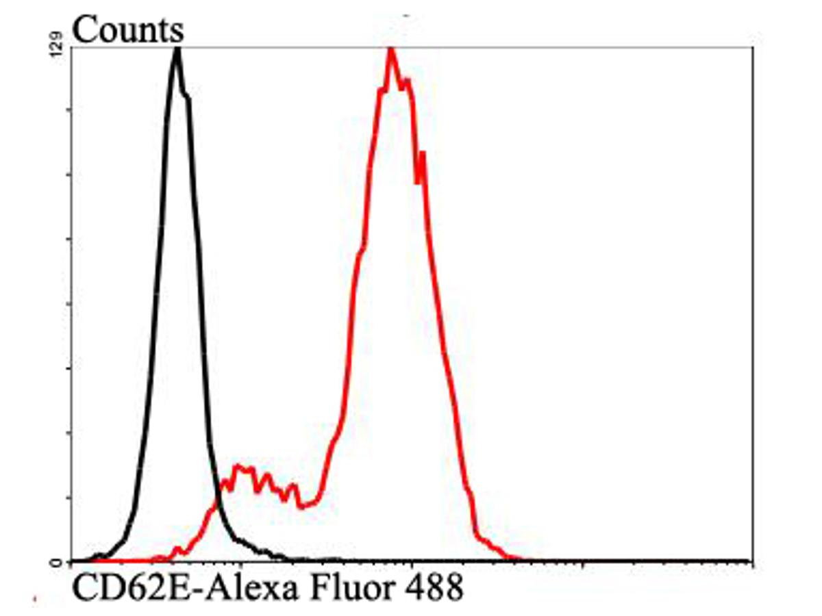 Flow cytometric analysis of Jurkat cells with CD62E antibody at 1/100 dilution (red) compared with an unlabelled control (cells without incubation with primary antibody; black). Alexa Fluor 488-conjugated goat anti-rabbit IgG was used as the secondary antibody.