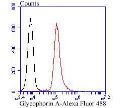 Flow cytometric analysis of Glycophorin A was done on K562 cells. The cells were fixed, permeabilized and stained with Glycophorin A antibody at 1/100 dilution (red) compared with an unlabelled control (cells without incubation with primary antibody; black). After incubation of the primary antibody on room temperature for an hour, the cells was stained with a Alexa Fluor™ 488-conjugated goat anti-Rabbit IgG Secondary antibody at 1/500 dilution for 30 minutes.
