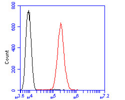 Flow cytometric analysis of ARF1 was done on SHSY5Y cells. The cells were fixed, permeabilized and stained with the primary antibody (0807-7, 1/100) (red). After incubation of the primary antibody at room temperature for an hour, the cells were stained with a Alexa Fluor 488-conjugated goat anti-rabbit IgG Secondary antibody at 1/500 dilution for 30 minutes.Unlabelled sample was used as a control (cells without incubation with primary antibody; blcak).