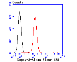 Flow cytometric analysis of N2A cells with Dopey-2 antibody at 1/100 dilution (red) compared with an unlabelled control (cells without incubation with primary antibody; black).Alexa Fluor 488-conjugated goat anti-rabbit IgG was used as the secondary antibody.