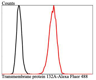 Flow cytometric analysis of SH-SY-5Y cells with Transmembrane protein 132A antibody at 1/100 dilution (red) compared with an unlabelled control (cells without incubation with primary antibody; black). Alexa Fluor 488-conjugated goat anti-rabbit IgG was used as the secondary antibody.