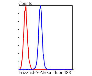 Flow cytometric analysis of Frizzled-5 was done on HepG2 cells. The cells were fixed, permeabilized and stained with Frizzled-5 antibody at 1/100 dilution (blue) compared with an unlabelled control (cells without incubation with primary antibody; red). After incubation of the primary antibody on room temperature for an hour, the cells was stained with a Alexa Fluor™ 488-conjugated goat anti-rabbit IgG Secondary antibody at 1/500 dilution.
