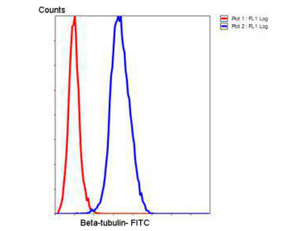 Flow cytometric analysis of HeLa cells with β-tubulin antibody at 1/50 dilution (blue) compared with an unlabelled control (cells without incubation with primary antibody; red). Goat anti mouse IgG (FITC) was used as the secondary antibody.