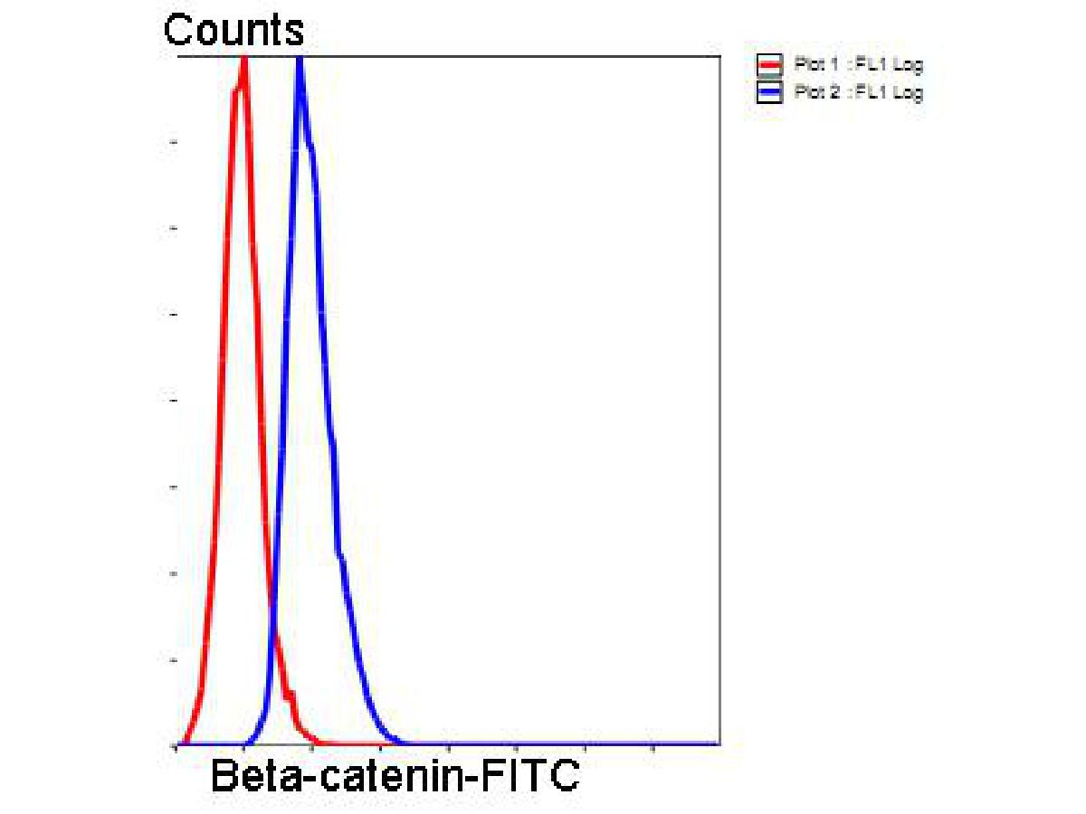 Flow cytometric analysis of Hela cells with Beta-catenin antibody at 1/50 dilution (blue) compared with an unlabelled control (cells without incubation with primary antibody; red). Goat anti mouse IgG (FITC) was used as the secondary antibody.