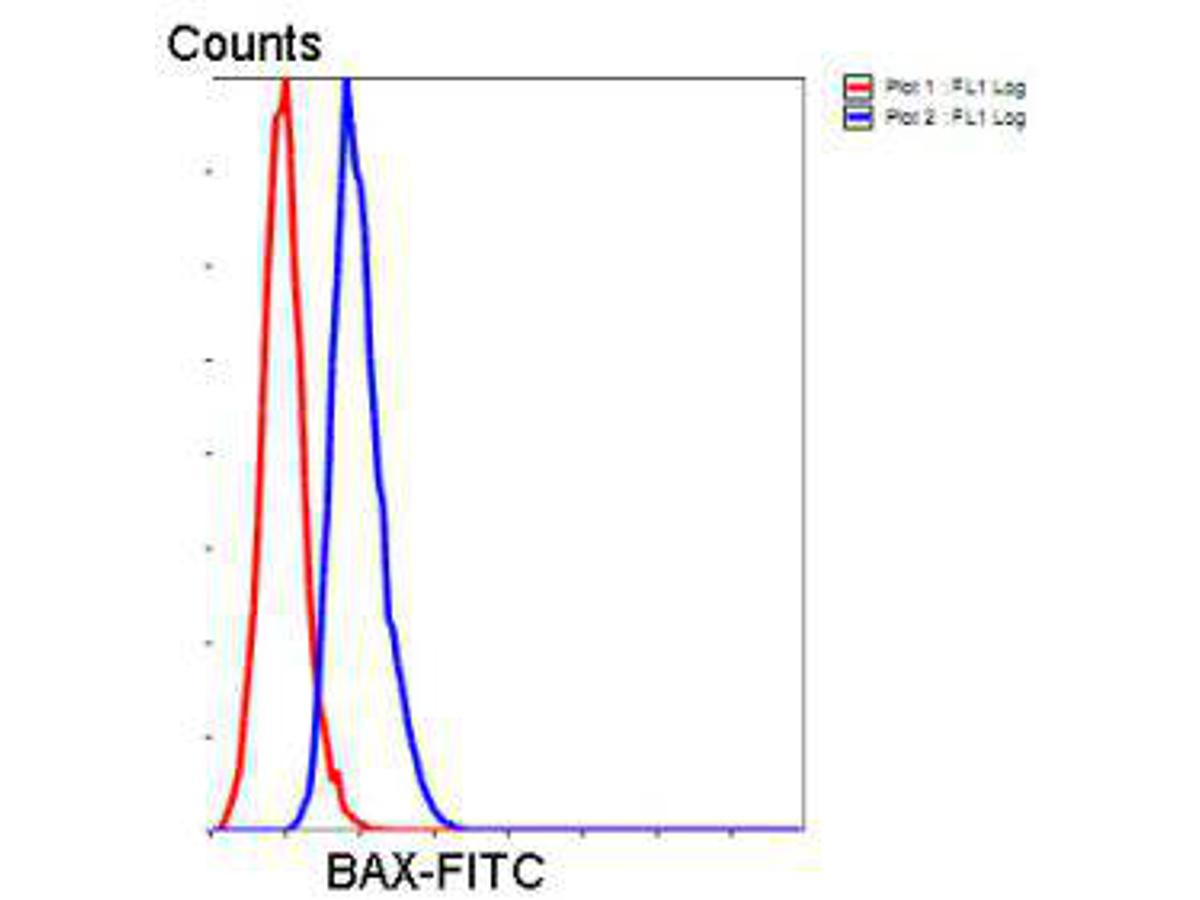 Flow cytometric analysis of Hela cells with vimentin antibody at 1/50 dilution (blue) compared with an unlabelled control (cells without incubation with primary antibody; red). Goat anti mouse IgA (FITC) was used as the secondary antibody.