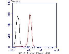 Flow cytometric analysis of HUVEC cells with IMP3 antibody at 1/100 dilution (red) compared with an unlabelled control (cells without incubation with primary antibody; black).