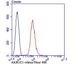 Flow cytometric analysis of HepG2 cells with AKR1C1 antibody at 1/100 dilution (red) compared with an unlabelled control (cells without incubation with primary antibody; black). Alexa Fluor 488-conjugated goat anti mouse IgG was used as the secondary antibody.