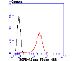 Flow cytometric analysis of A431 cells with EGFR antibody at 1/100 dilution (red) compared with an unlabelled control (cells without incubation with primary antibody; black). Alexa Fluor 488-conjugated Goat anti mouse IgG was used as the secondary antibody.