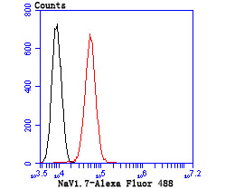 Flow cytometric analysis of A549 cells with NaV1.7 antibody at 1/50 dilution (blue) compared with an unlabelled control (cells without incubation with primary antibody; red). Goat anti mouse IgG (FITC) was used as the secondary antibody.