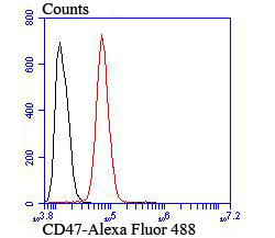 Flow cytometric analysis of SH-SY5Y cells with CD47 antibody at 1/100 dilution (red) compared with an unlabelled control (cells without incubation with primary antibody; black). Alexa Fluor 488-conjugated goat anti mouse IgG was used as the secondary antibody.