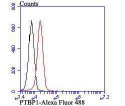 Flow cytometric analysis of K562 cells with PTBP1 antibody at 1/100 dilution (red) compared with an unlabelled control (cells without incubation with primary antibody; black). Alexa Fluor 488-conjugated goat anti-mouse IgG was used as the secondary antibody.