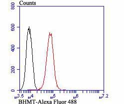 Flow cytometric analysis of HepG2 cells with BHMT antibody at 1/100 dilution (red) compared with an unlabelled control (cells without incubation with primary antibody; black). Alexa Fluor 488-conjugated goat anti-mouse IgG1 was used as the secondary antibody.
