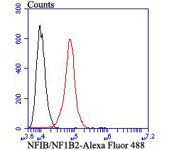 Flow cytometric analysis of SH-SY-5Y cells with NFIB/NF1B2 antibody at 1/100 dilution (red) compared with an unlabelled control (cells without incubation with primary antibody; black). Alexa Fluor 488-conjugated goat anti-mouse IgG was used as the secondary antibody.