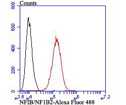 Flow cytometric analysis of SH-SY5Y cells with NFIB/NF1B2 antibody at 1/100 dilution (red) compared with an unlabelled control (cells without incubation with primary antibody; black). Alexa Fluor 488-conjugated goat anti-mouse IgG was used as the secondary antibody.
