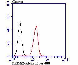 Flow cytometric analysis of PC-3M cells with Peroxiredoxin 2 antibody at 1/100 dilution (red) compared with an unlabelled control (cells without incubation with primary antibody; black). Alexa Fluor 488-conjugated goat anti-mouse IgG was used as the secondary antibody.