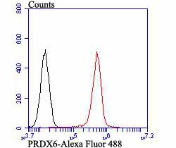 Flow cytometric analysis of PC-3M cells with PRDX6 antibody at 1/100 dilution (red) compared with an unlabelled control (cells without incubation with primary antibody; black). Alexa Fluor 488-conjugated goat anti-mouse IgG was used as the secondary antibody.