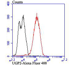 Flow cytometric analysis of LOVO cells with UGP2 antibody at 1/100 dilution (red) compared with an unlabelled control (cells without incubation with primary antibody; black). Alexa Fluor 488-conjugated goat anti-mouse IgG was used as the secondary antibody.