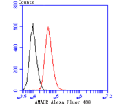 Flow cytometric analysis of A549 cells with AMACR/P504S antibody at 1/100 dilution (red) compared with an unlabelled control (cells without incubation with primary antibody; black). Alexa Fluor 488-conjugated goat anti-mouse IgG was used as the secondary antibody.