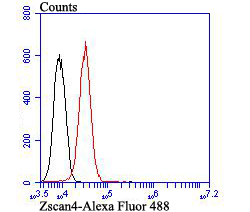 Flow cytometric analysis of HepG2 cells with Zscan4 antibody at 1/100 dilution (red) compared with an unlabelled control (cells without incubation with primary antibody; black). Alexa Fluor 488-conjugated goat anti-mouse IgG was used as the secondary antibody.