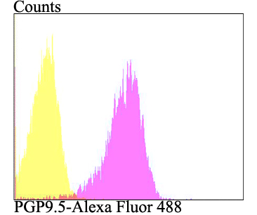 Flow cytometric analysis of A549 cells with PGP9.5 antibody at 1/100 dilution (fuchsia) compared with an unlabelled control (cells without incubation with primary antibody; yellow). Alexa Fluor 488-conjugated goat anti-mouse IgG was used as the secondary antibody.