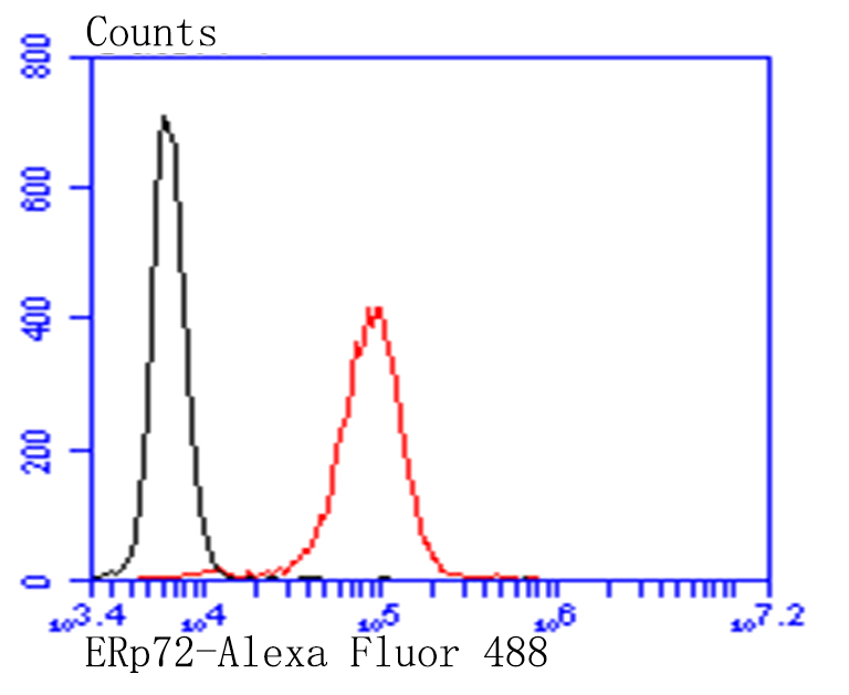 Flow cytometric analysis of SiHa cells with ERp72 antibody at 1/100 dilution (red) compared with an unlabelled control (cells without incubation with primary antibody; black). Alexa Fluor 488-conjugated goat anti-mouse IgG was used as the secondary antibody.