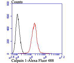 Flow cytometric analysis of A431 cells with Calpain 1 antibody at 1/100 dilution (red) compared with an unlabelled control (cells without incubation with primary antibody; black). Alexa Fluor 488-conjugated goat anti-mouse IgG was used as the secondary antibody.