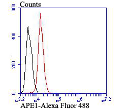 Flow cytometric analysis of APE1 was done on SiHa cells. The cells were fixed, permeabilized and stained with APE1 antibody at 1/100 dilution (red) compared with an unlabelled control (cells without incubation with primary antibody; black). After incubation of the primary antibody on room temperature for an hour, the cells was stained with a Alexa Fluor™ 488-conjugated goat anti-mouse IgG Secondary antibody at 1/500 dilution for 30 minutes.