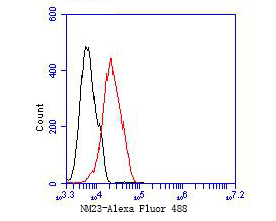 Flow cytometric analysis of NM23 was done on 293 cells. The cells were fixed, permeabilized and stained with the primary antibody (EM1901-09, 1/50) (red). After incubation of the primary antibody at room temperature for an hour, the cells were stained with a Alexa Fluor 488-conjugated Goat anti-Mouse IgG Secondary antibody at 1/1000 dilution for 30 minutes.Unlabelled sample was used as a control (cells without incubation with primary antibody; black).
