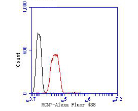 Flow cytometric analysis of MCM7 was done on SH-SY5Y cells. The cells were fixed, permeabilized and stained with the primary antibody (EM1901-12, 1/50) (red). After incubation of the primary antibody at room temperature for an hour, the cells were stained with a Alexa Fluor 488-conjugated Goat anti-Mouse IgG Secondary antibody at 1/1000 dilution for 30 minutes.Unlabelled sample was used as a control (cells without incubation with primary antibody; black).