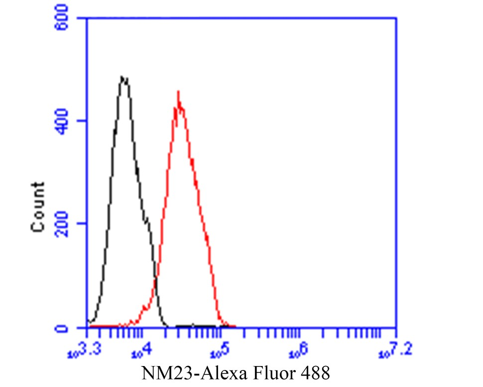 Flow cytometric analysis of NM23 was done on293 cells. The cells were fixed, permeabilized and stained with the primary antibody (EM1901-18, 1/100) (red). After incubation of the primary antibody at room temperature for an hour, the cells were stained with a Alexa Fluor 488-conjugated goat anti-Mouse IgG Secondary antibody at 1/500 dilution for 30 minutes.Unlabelled sample was used as a control (cells without incubation with primary antibody; black).