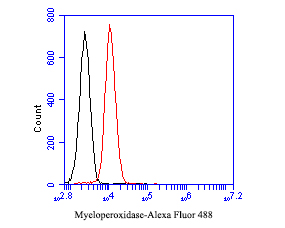 Flow cytometric analysis of Myeloperoxidase was done on HL-60 cells. The cells were fixed, permeabilized and stained with the primary antibody (EM1901-19, 1/50) (red). After incubation of the primary antibody at room temperature for an hour, the cells were stained with a Alexa Fluor 488-conjugated Goat anti-Mouse IgG Secondary antibody at 1/1000 dilution for 30 minutes.Unlabelled sample was used as a control (cells without incubation with primary antibody; black).