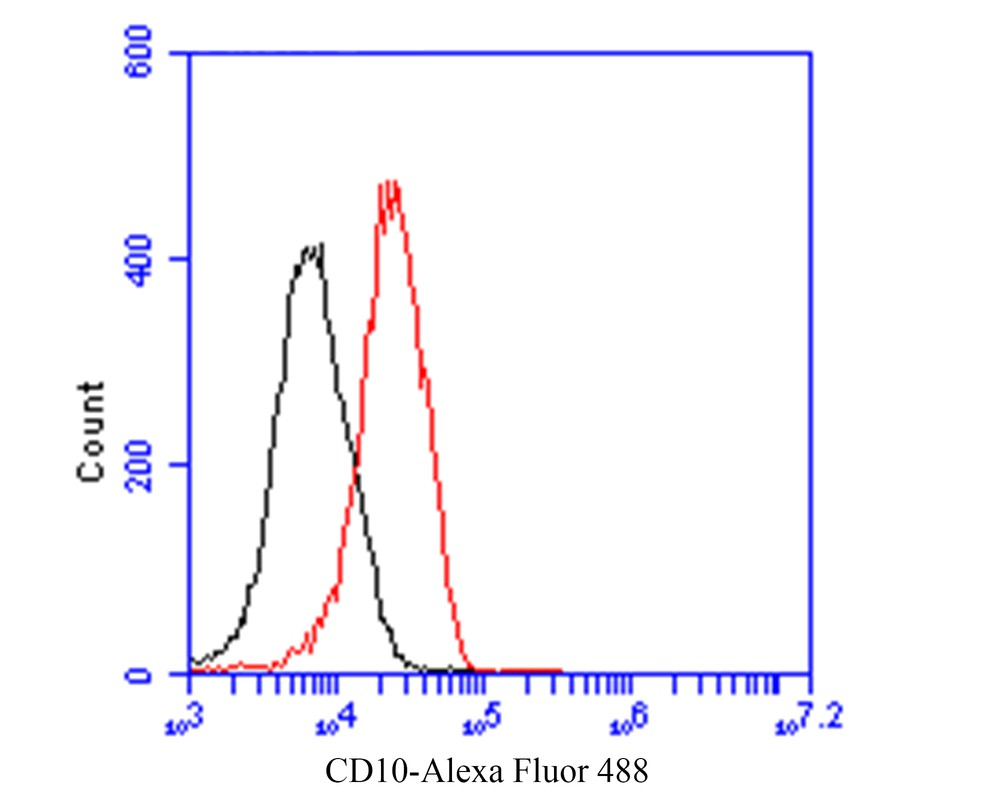 Flow cytometric analysis of CD10 was done on 293 cells. The cells were fixed, permeabilized and stained with the primary antibody (EM1901-26, 1/100) (red). After incubation of the primary antibody at room temperature for an hour, the cells were stained with a Alexa Fluor 488-conjugated goat anti-Mouse IgG Secondary antibody at 1/500 dilution for 30 minutes.Unlabelled sample was used as a control (cells without incubation with primary antibody; black).