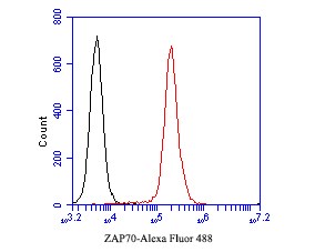Flow cytometric analysis of ZAP70 was done on Jurakt cells. The cells were fixed, permeabilized and stained with the primary antibody (EM1901-27, 1/50) (red). After incubation of the primary antibody at room temperature for an hour, the cells were stained with a Alexa Fluor 488-conjugated Goat anti-Mouse IgG Secondary antibody at 1/1000 dilution for 30 minutes.Unlabelled sample was used as a control (cells without incubation with primary antibody; black).
