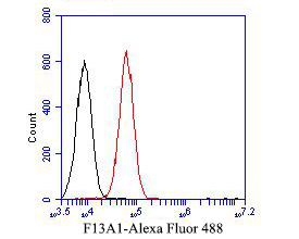 Flow cytometric analysis of F13A1 was done on A549 cells. The cells were fixed, permeabilized and stained with the primary antibody (EM1901-38, 1/50) (red). After incubation of the primary antibody at room temperature for an hour, the cells were stained with a Alexa Fluor 488-conjugated Goat anti-Mouse IgG Secondary antibody at 1/1000 dilution for 30 minutes.Unlabelled sample was used as a control (cells without incubation with primary antibody; black).