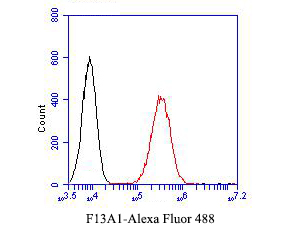 Flow cytometric analysis of F13A1 was done on A549 cells. The cells were fixed, permeabilized and stained with the primary antibody (EM1901-39, 1/50) (red). After incubation of the primary antibody at room temperature for an hour, the cells were stained with a Alexa Fluor 488-conjugated Goat anti-Mouse IgG Secondary antibody at 1/1000 dilution for 30 minutes.Unlabelled sample was used as a control (cells without incubation with primary antibody; black).