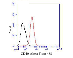 Flow cytometric analysis of CD40 was done on Daudi cells. The cells were fixed, permeabilized and stained with the primary antibody (EM1901-40, 1/50) (red). After incubation of the primary antibody at room temperature for an hour, the cells were stained with a Alexa Fluor 488-conjugated Goat anti-Mouse IgG Secondary antibody at 1/1000 dilution for 30 minutes.Unlabelled sample was used as a control (cells without incubation with primary antibody; black).