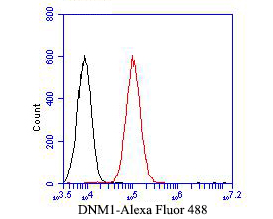 Flow cytometric analysis of Dynamin 1 was done on A549 cells. The cells were fixed, permeabilized and stained with the primary antibody (EM1901-42, 1/50) (red). After incubation of the primary antibody at room temperature for an hour, the cells were stained with a Alexa Fluor 488-conjugated Goat anti-Mouse IgG Secondary antibody at 1/1000 dilution for 30 minutes.Unlabelled sample was used as a control (cells without incubation with primary antibody; black).