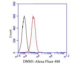 Flow cytometric analysis of Dynamin 1 was done on A549 cells. The cells were fixed, permeabilized and stained with the primary antibody (EM1901-43, 1/50) (red). After incubation of the primary antibody at room temperature for an hour, the cells were stained with a Alexa Fluor 488-conjugated Goat anti-Mouse IgG Secondary antibody at 1/1000 dilution for 30 minutes.Unlabelled sample was used as a control (cells without incubation with primary antibody; black).