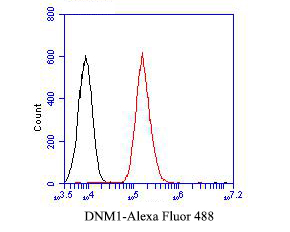 Flow cytometric analysis of Dynamin 1 was done on A549 cells. The cells were fixed, permeabilized and stained with the primary antibody (EM1901-44, 1/50) (red). After incubation of the primary antibody at room temperature for an hour, the cells were stained with a Alexa Fluor 488-conjugated Goat anti-Mouse IgG Secondary antibody at 1/1000 dilution for 30 minutes.Unlabelled sample was used as a control (cells without incubation with primary antibody; black).