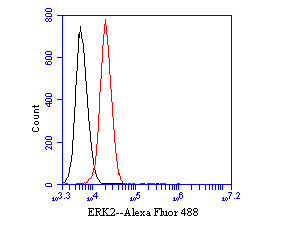 Flow cytometric analysis of ERK2 was done on K562 cells. The cells were fixed, permeabilized and stained with the primary antibody (EM1901-53, 1/50) (red). After incubation of the primary antibody at room temperature for an hour, the cells were stained with a Alexa Fluor 488-conjugated Goat anti-Mouse IgG Secondary antibody at 1/1000 dilution for 30 minutes.Unlabelled sample was used as a control (cells without incubation with primary antibody; black).