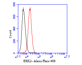 Flow cytometric analysis of ERK2 was done on K562 cells. The cells were fixed, permeabilized and stained with the primary antibody (EM1901-54, 1/50) (red). After incubation of the primary antibody at room temperature for an hour, the cells were stained with a Alexa Fluor 488-conjugated Goat anti-Mouse IgG Secondary antibody at 1/1000 dilution for 30 minutes.Unlabelled sample was used as a control (cells without incubation with primary antibody; black).